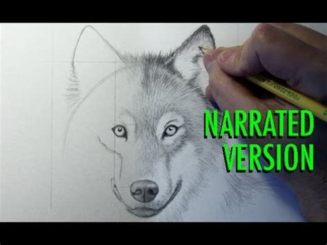 draw  wolf narrated youtube