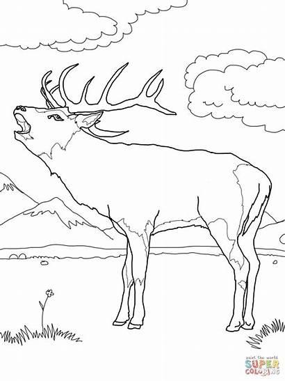 Coloring Deer Chevreuil Ausmalbilder European Rothirsch Coloriage