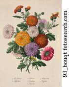 Drawing Antique Floral Illustration Sunflower Hand