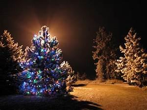 Christmas, Light, Trees, Outdoor