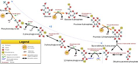 difference  krebs cycle  glycolysis definition