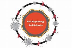 bed bug biology and behavior With bed bug biology