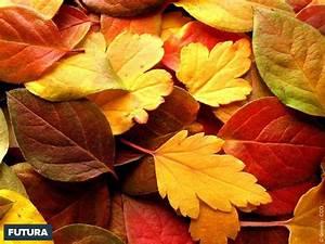 Fond d39ecran feuilles d39automne for Forum plan de maison 13 fond decran feuilles dautomne