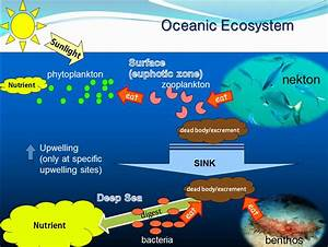 definitions defining: brief definition about eco system of ...