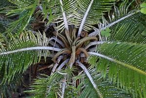 Läuse An Pflanzen : palme hat l use so bek mpfen sie sie erfolgreich ~ One.caynefoto.club Haus und Dekorationen