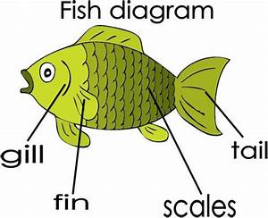 Fish Diagram Flashcard