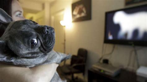 dog sees   guys  tv barkpost