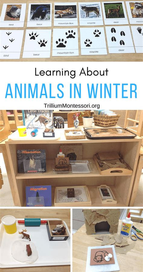 animals in winter trillium montessori 906 | Animals in Winter 1