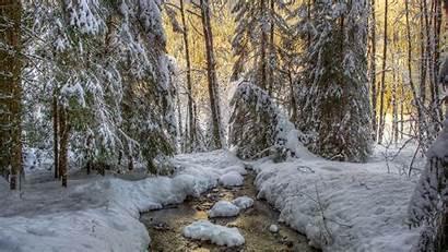 Forest Winter Desktop Wallpapers Backgrounds Computer Widescreen