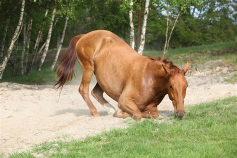 Impaction Colic In Horses Symptoms Causes Diagnosis