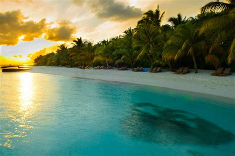 sunrise   school  fish   maldives beautiful