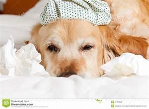 Hond verkouden