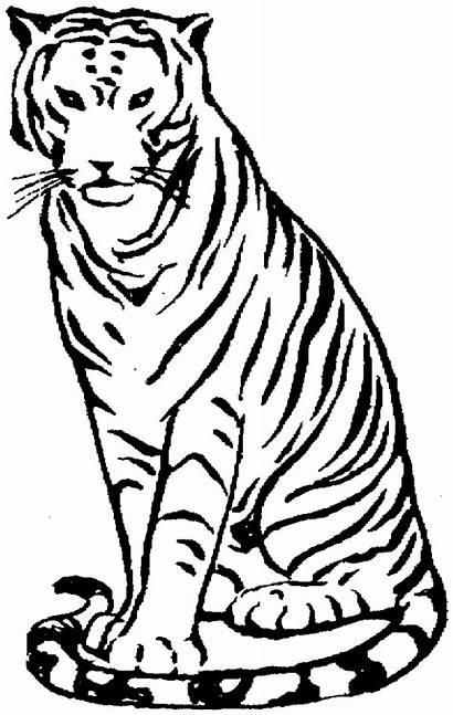 Tiger Coloring Zoo Animals Ausmalbilder Printable Bengal