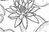 Lily Easter Coloring Drawing Water Printable Pages Lilies Flowers Waterlily Getdrawings sketch template