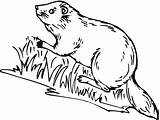 Beaver Coloring Pages Animals River Bank Printable Coloringpages101 sketch template