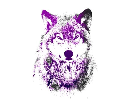 Blue And Purple Wolf Wallpaper by Purple Wolf Wallpapers
