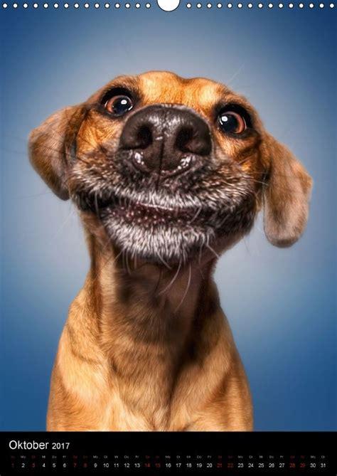 kalender funny faces lustige hundebilder hunde bilder