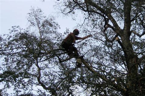 Lantra Chainsaw and Tree Surgery Training in North Wales