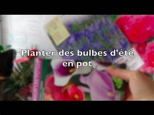 Bulbes D été : planter des bulbes d 39 t en pot pour le balcon arum ~ Melissatoandfro.com Idées de Décoration