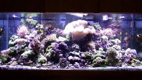 210 Gallon Saltwater Aquarium Youtube