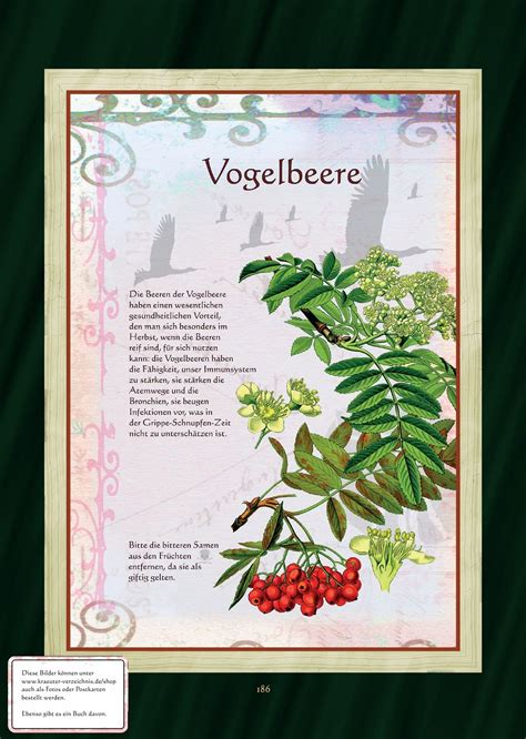 Laubbäume Garten Pflanzen by Pin Grafparzival Auf Kr 228 Uterbuch Kr 228 Uterpflanzen