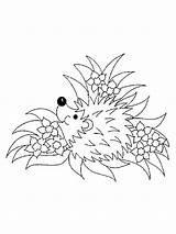 Coloring Hedgehog Animal Animals Template Printable Templates sketch template