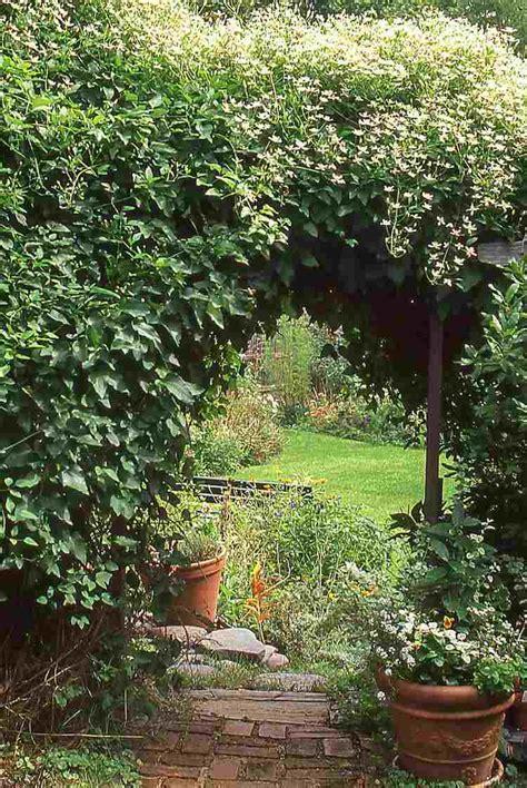 Kletterpflanze Mit Blüten by 12 Tolle Vorschl 228 Ge F 252 R Schnellwachsende Kletterpflanze Im