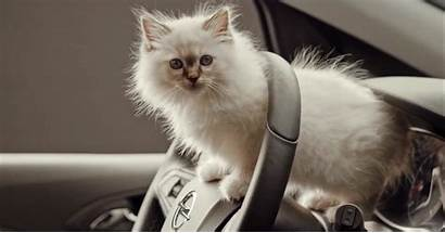 Opel Adorable Kittens Corsa Ad Into Stuffs