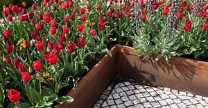 Mein Schöner Garten De : cortenstahl f r den garten mein sch ner garten ~ Lizthompson.info Haus und Dekorationen