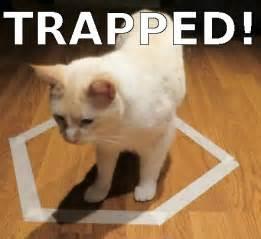 Cat Trap Meme - cat trap meme 100 images 25 funny cat memes cattime trap cat cat funny guns badass meme