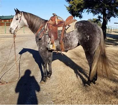Smoky Sm Horse Ranch Darla Hoover Sk