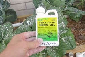 Protect Your Garden From Pests Diy