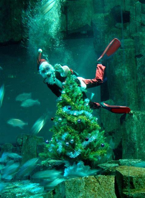 aquarium de noel 2016 offres groupe noel