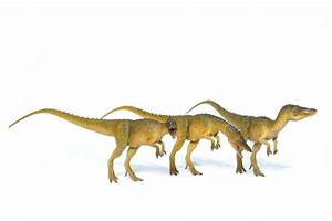 Opinions on Compsognathus