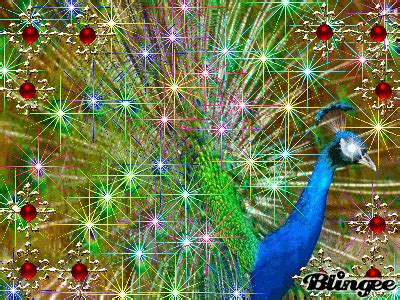 peacock glitter picture  blingeecom