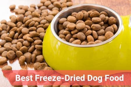 top rated freeze dried dog food   therapy pet