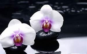 Orchidee Klebrige Tropfen : die 52 besten hintergrundbilder der natur blumen und ~ Lizthompson.info Haus und Dekorationen