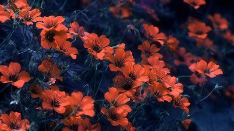 orange flowers with leaves hd orange aesthetic wallpapers