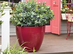 Heidelbeere Im Kübel : heidelbeere brazelberry 39 pink breeze 39 vaccinium ~ Lizthompson.info Haus und Dekorationen