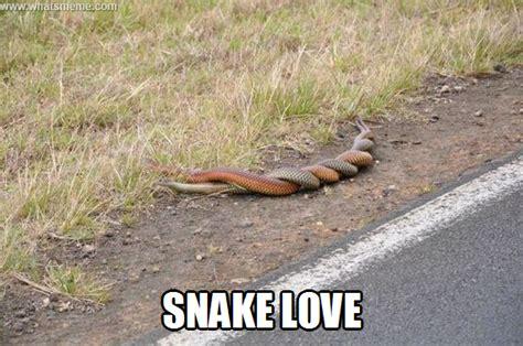 Snake Memes - snake memes or memes image memes at relatably com