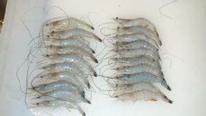Shrimp Boat Ormond by Shrimping At High Bridge Ormond Florida