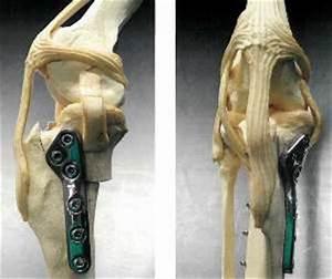 artrose knie hond