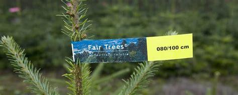 Weihnachtsbaum Nadelt Was Tun by Fair Gehandelter Weihnachtsbaum Mit Fair Trees