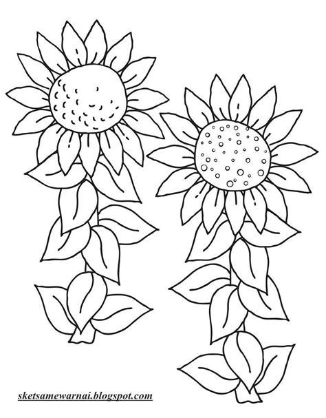 sketsa mewarnai gambar bunga matahari