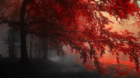Go back to original wallpaper page. Red Forest Trees Path, HD Nature, 4k Wallpapers, Images, Backgrounds, Photos and Pictures