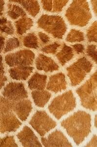 , skin giraffe, texture fur, fur texture background ...