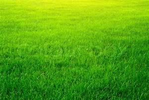 Green grass background | Stock Photo | Colourbox