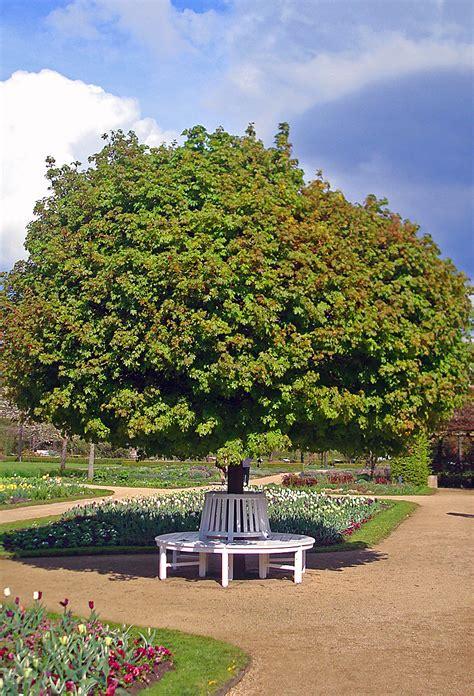 Botanischer Garten Gütersloh by Botanischer Garten Bonn Mit Parkartig Angelegtem Arboretum