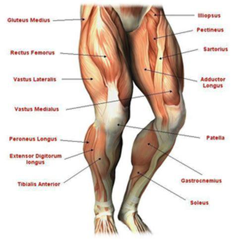 Muscolo Sedere Guide Cyclette Biz