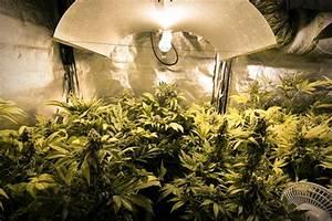 La Guida sulle Luci Artificiali per La Coltivazione della Marijuana Indoor RQS Blog